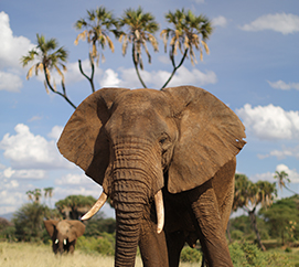 Samburu Elephant Project