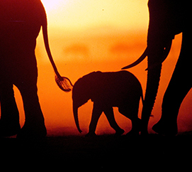 The Mara Elephant Project