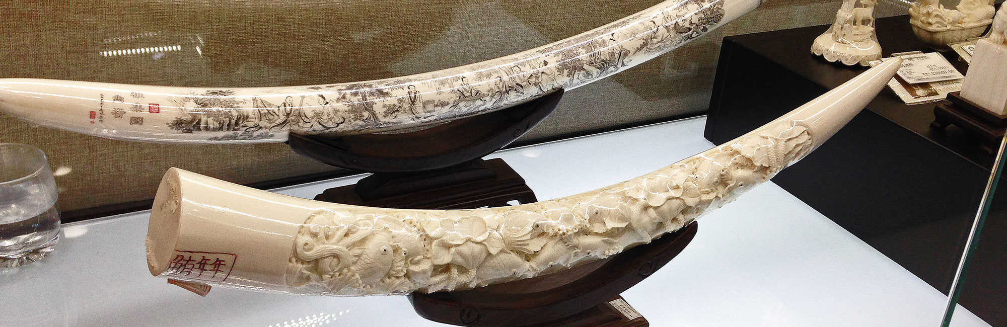 china-ivory-ban-slider