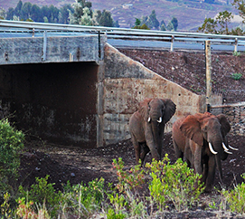 Wildlife Corridors