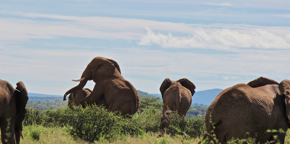 Why Elephants are Important - Save the Elephants